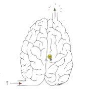 Cerveau final